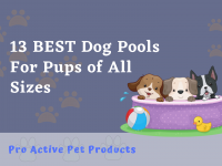 13 BEST Dog Pools For Pups of All Sizes