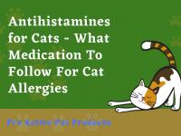 Antihistamines for Cats Sneezing