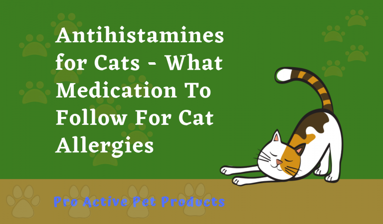 Antihistamines for Cats Sneezing – What You Need To Know!