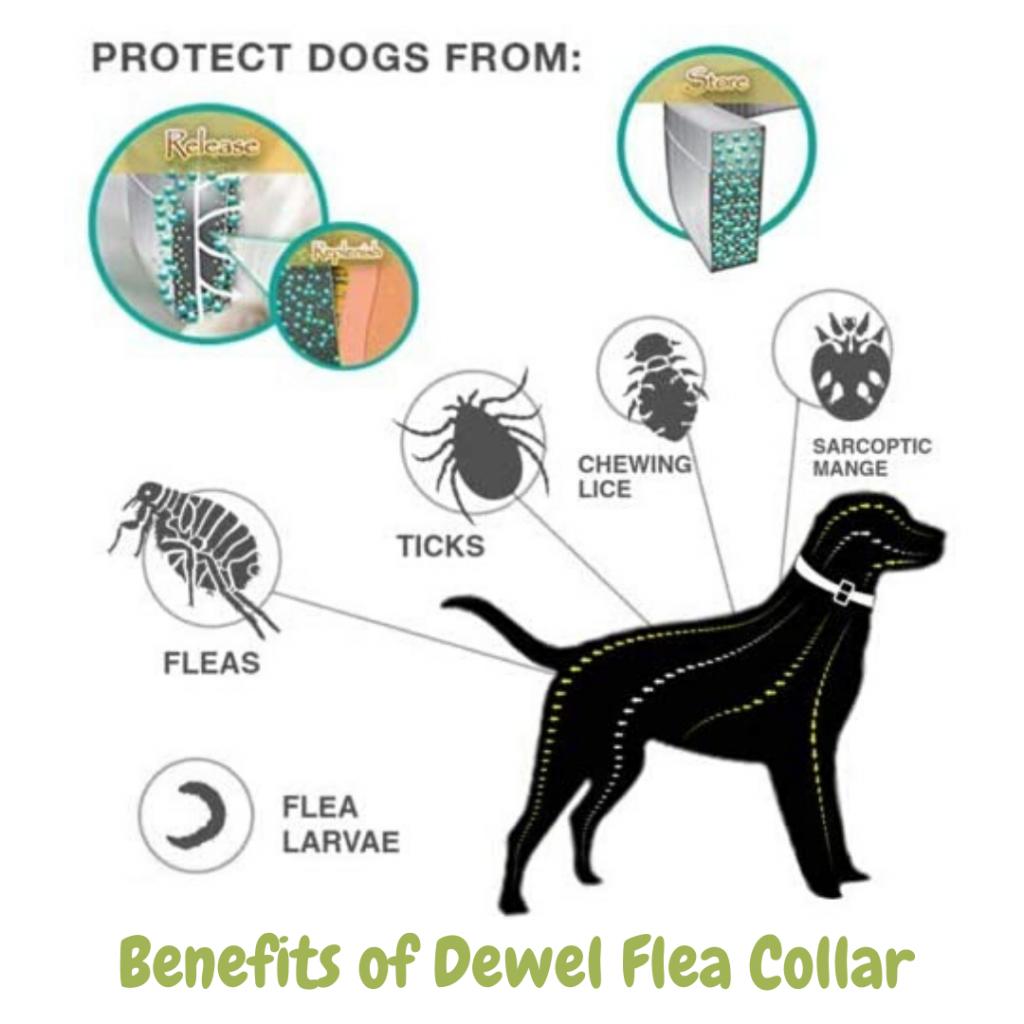 Benefits of Dewel Flea Collar