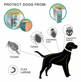 Dewel Flea And Tick Collar - Protect Dogs From
