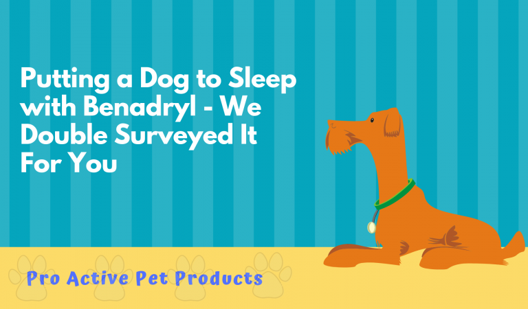 Putting a Dog to Sleep with Benadryl – We Double Surveyed It For You