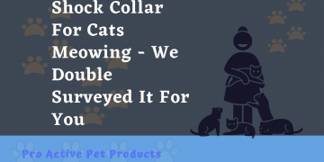 Shock Collar For Cats Meowing - We Double Surveyed It For You