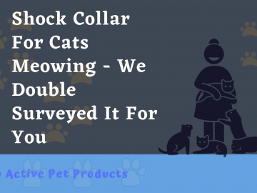 cat shock collar