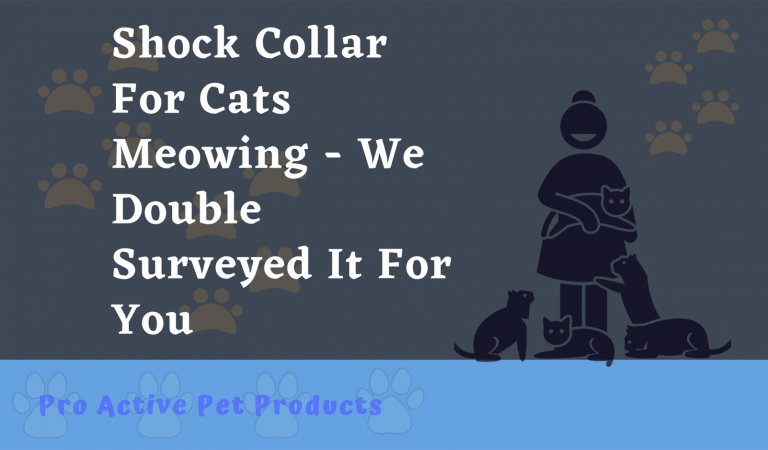 Shock Collar For Cats Meowing – We Double Surveyed It For You