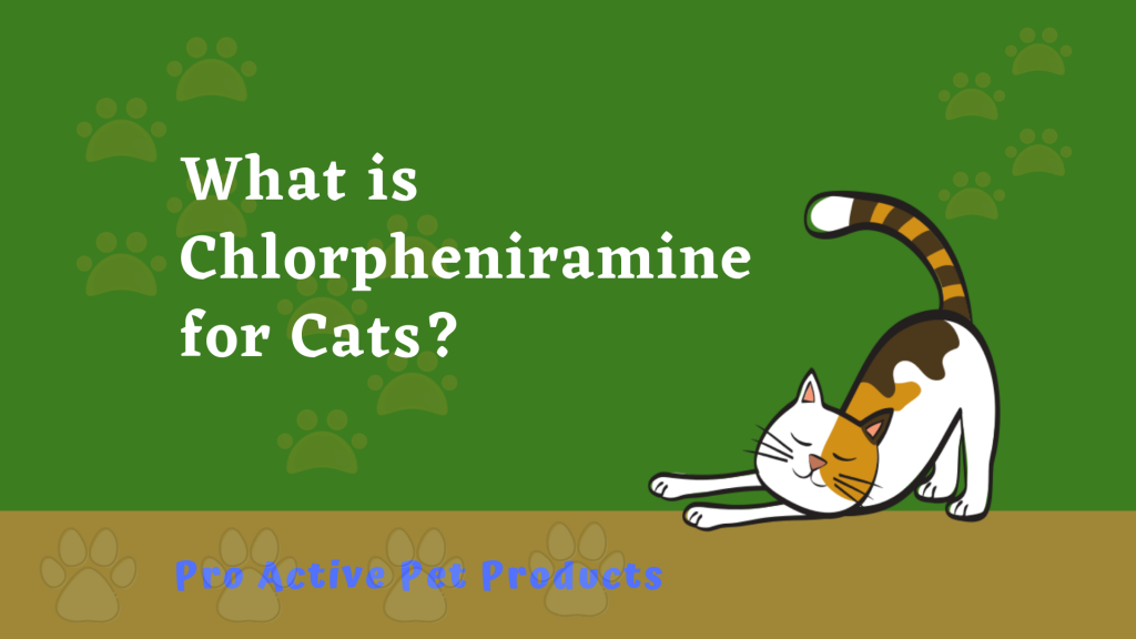 What is Chlorpheniramine for Cats