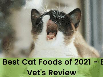 The 9 Best Cat Foods of 2021 - Expert Vet's Review