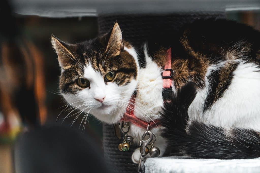 The Best Cat Harnesses [Reviewed] in 2021 - Expert Vet Tips