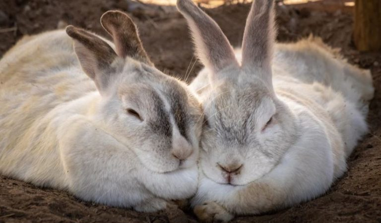 I adopted a rabbit: How can I take care of it?