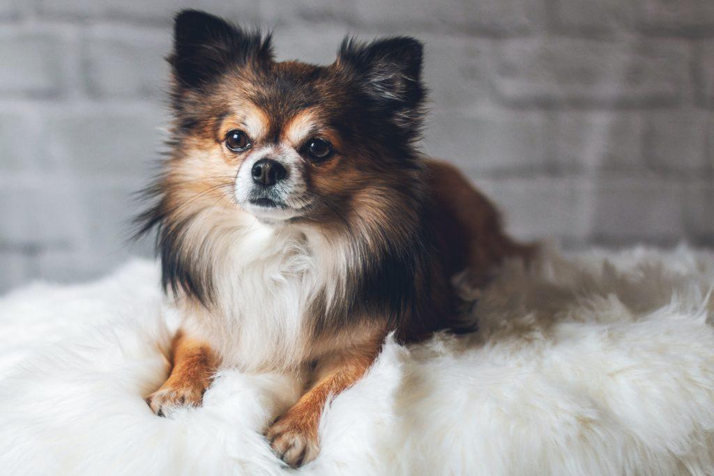cute dog with nice hair