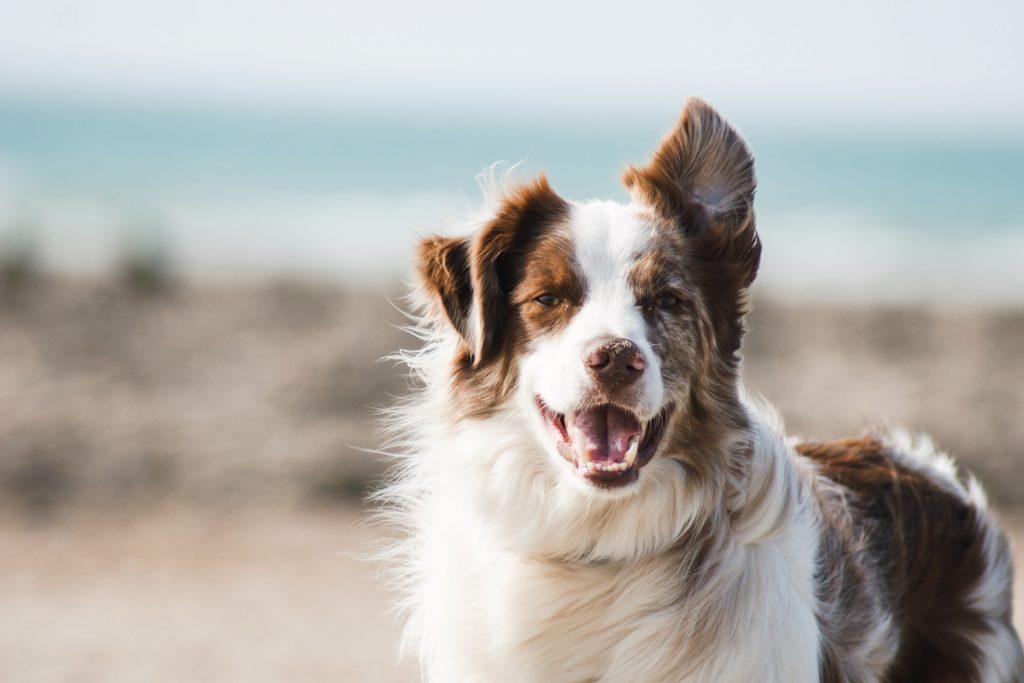 dog face landscape
