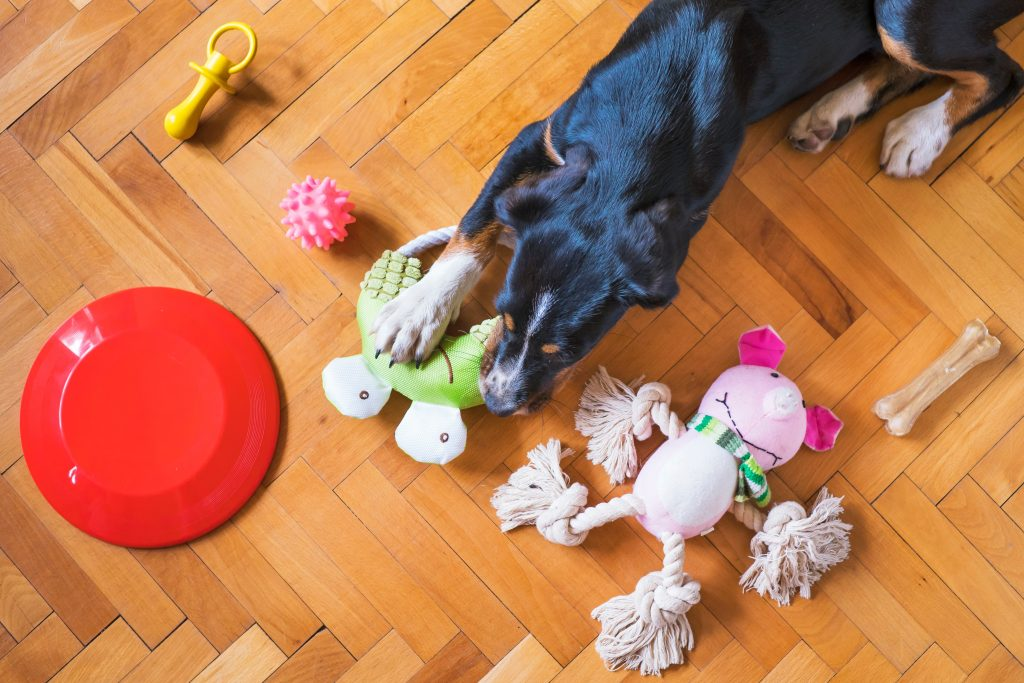 dog with his toys