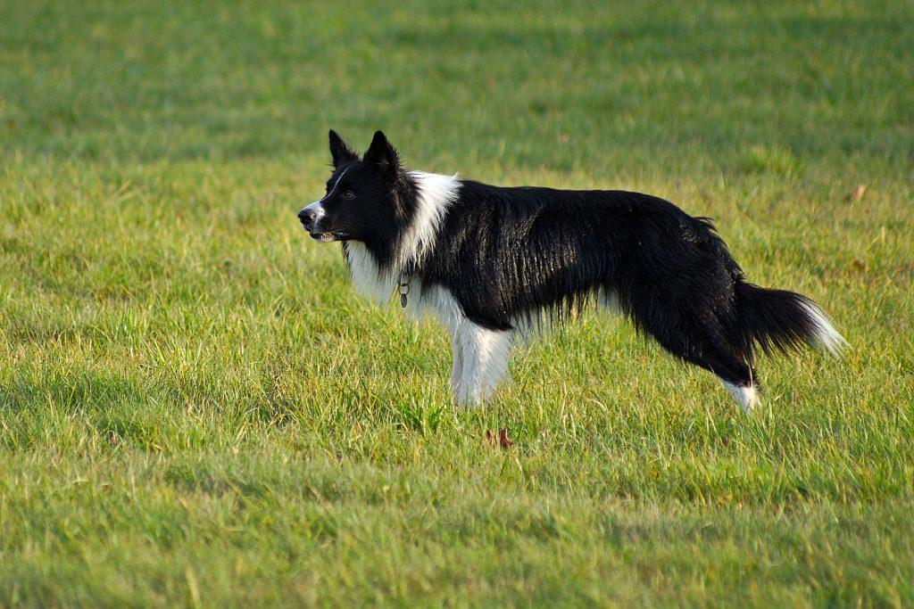 hair dog with shiny hair