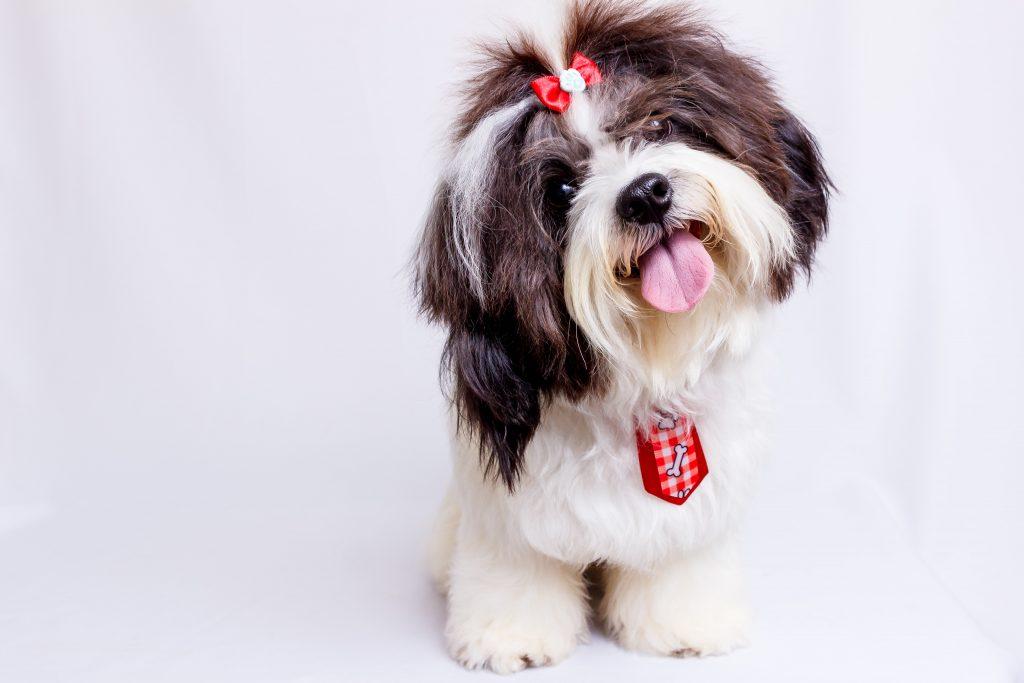 small dog posing
