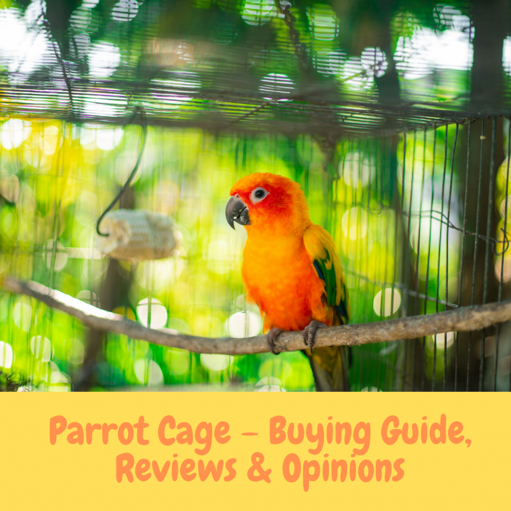 Parrot Cage – Buying Guide, Reviews & Opinions