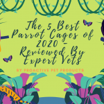 The 5 Best Parrot Cages of 2020 - Reviewed By Expert Vets