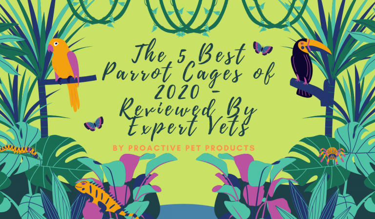 The 5 Best Parrot Cages of 2021 – Reviewed By Expert Vets