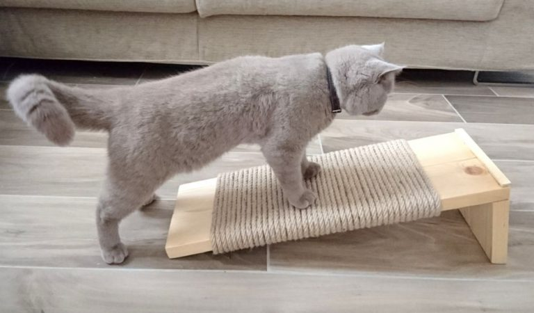 The Best Cat Scratchers – #3 is Top Rated, #5 is Cheapest