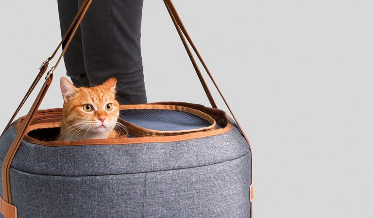 Top 5 Best Cat Carriers of 2020 – #2 is Most Reviewed