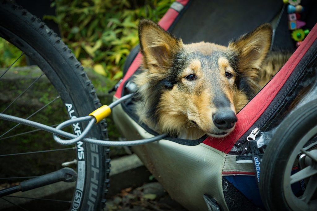 dog in a bike