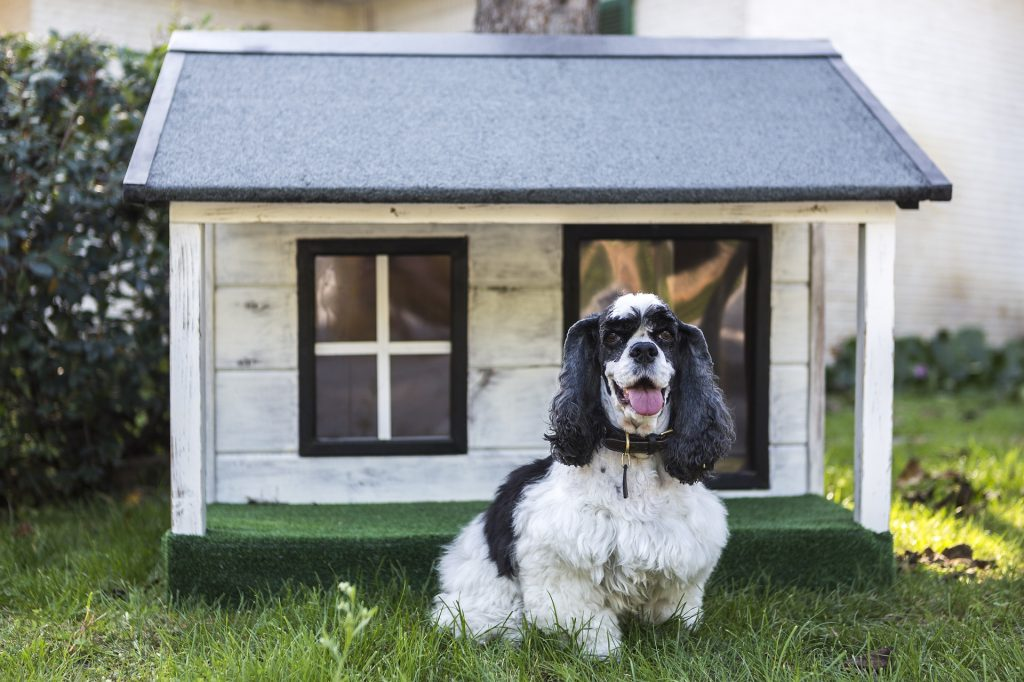 kennels-for-pets