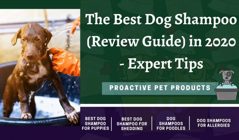 The Best Dog Shampoo (Review Guide) in 2020 – Expert Tips