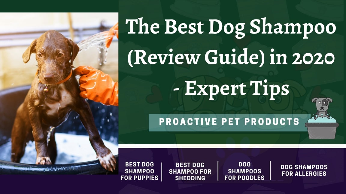 The Best Dog Shampoo (Review Guide) in 2020 - Expert Tips
