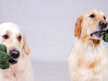 2 dogs having broccoli