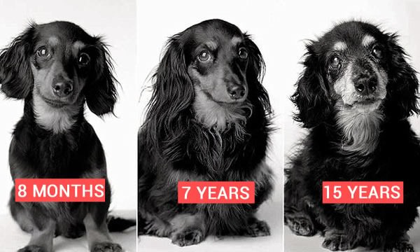 Dogs aging