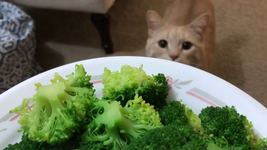 broccoli for cats