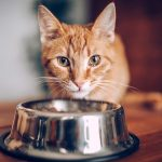 cat eating food from bowl