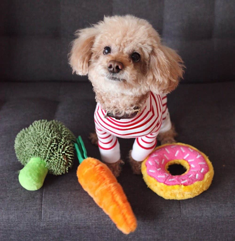 dog and vegetABLE TOY