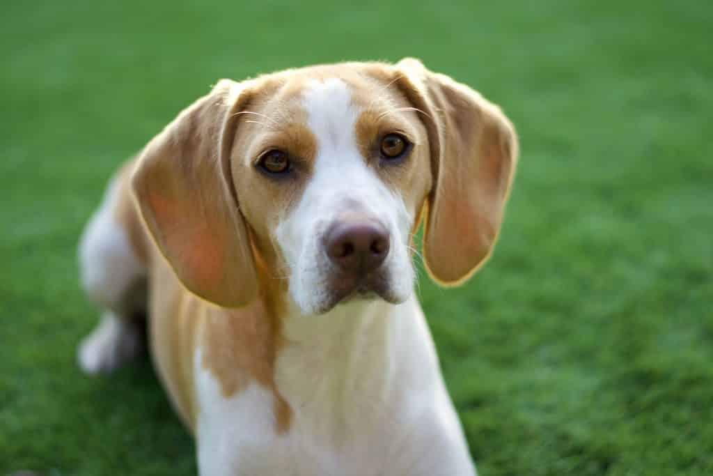 dog closeup photo
