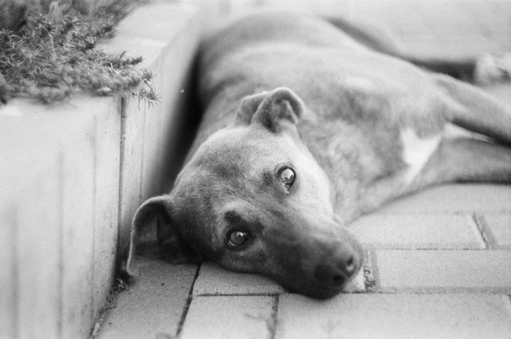dog in black n white filter
