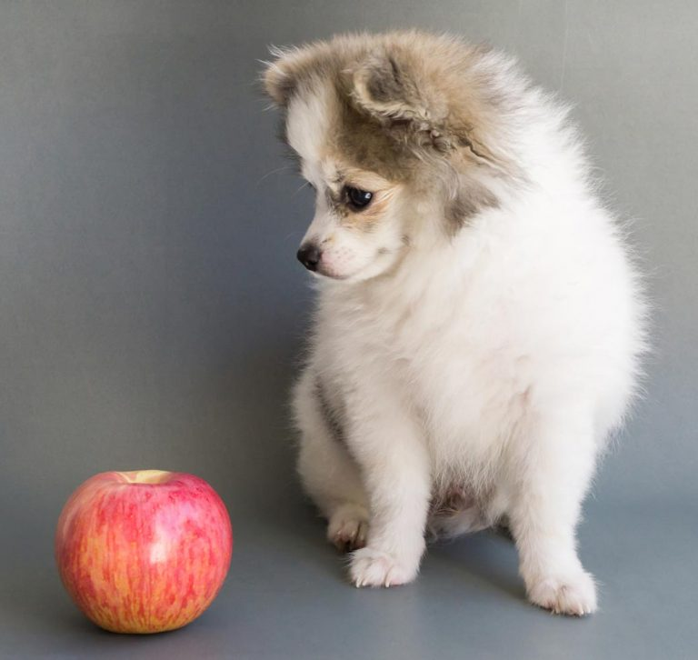 puppy looking at apple