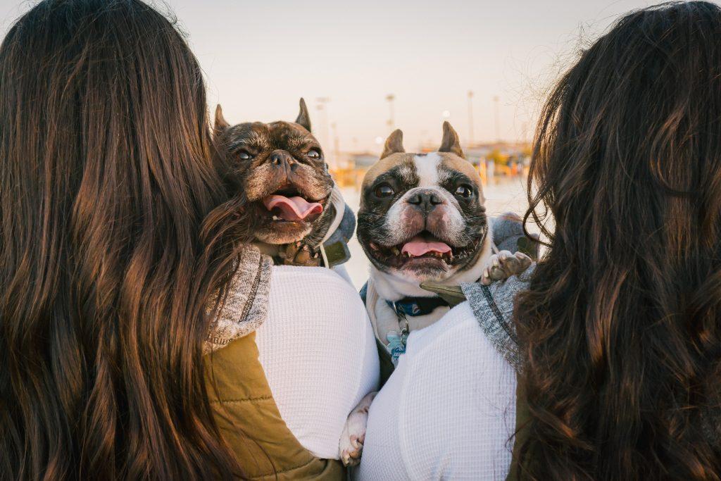 2 bedtfriend bulldogs