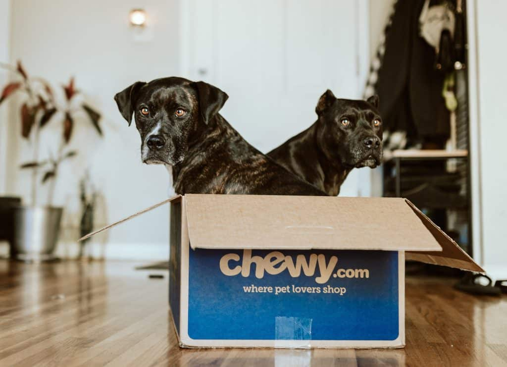 2 dogs in a box