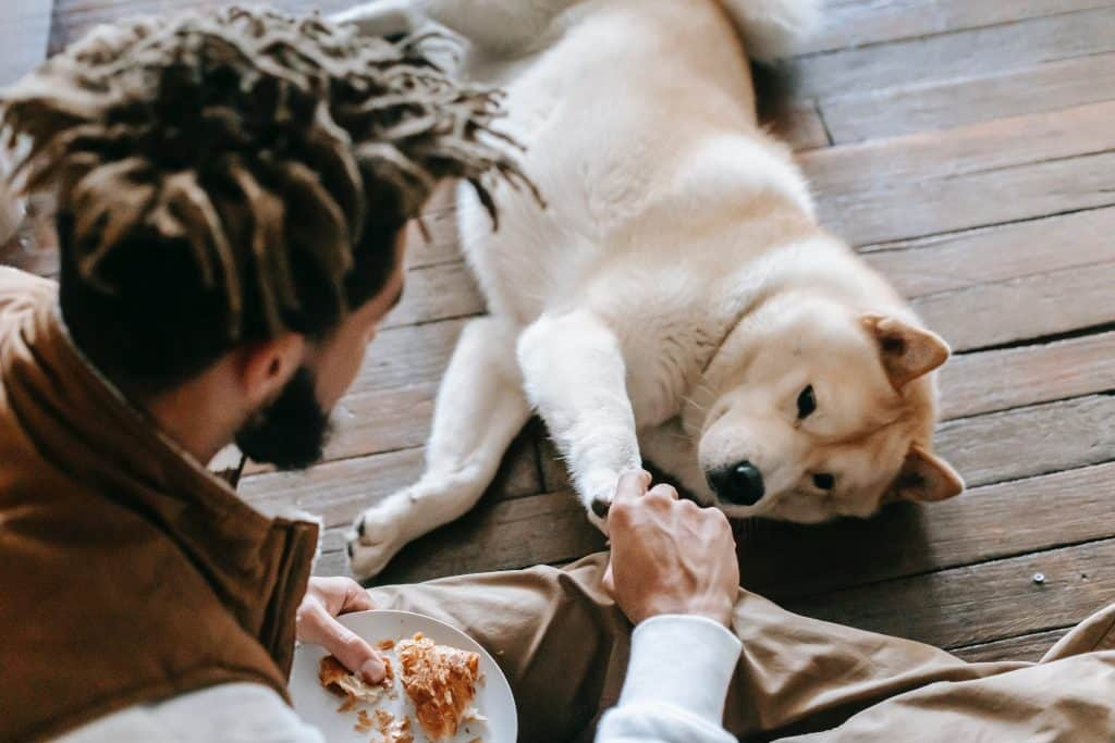 dog and owner playing