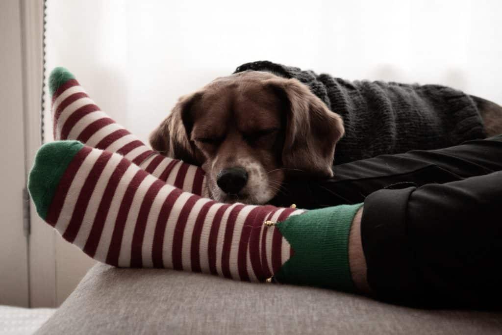 dog in a man's feet