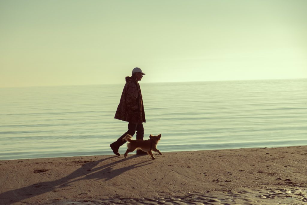 dog walking in beach