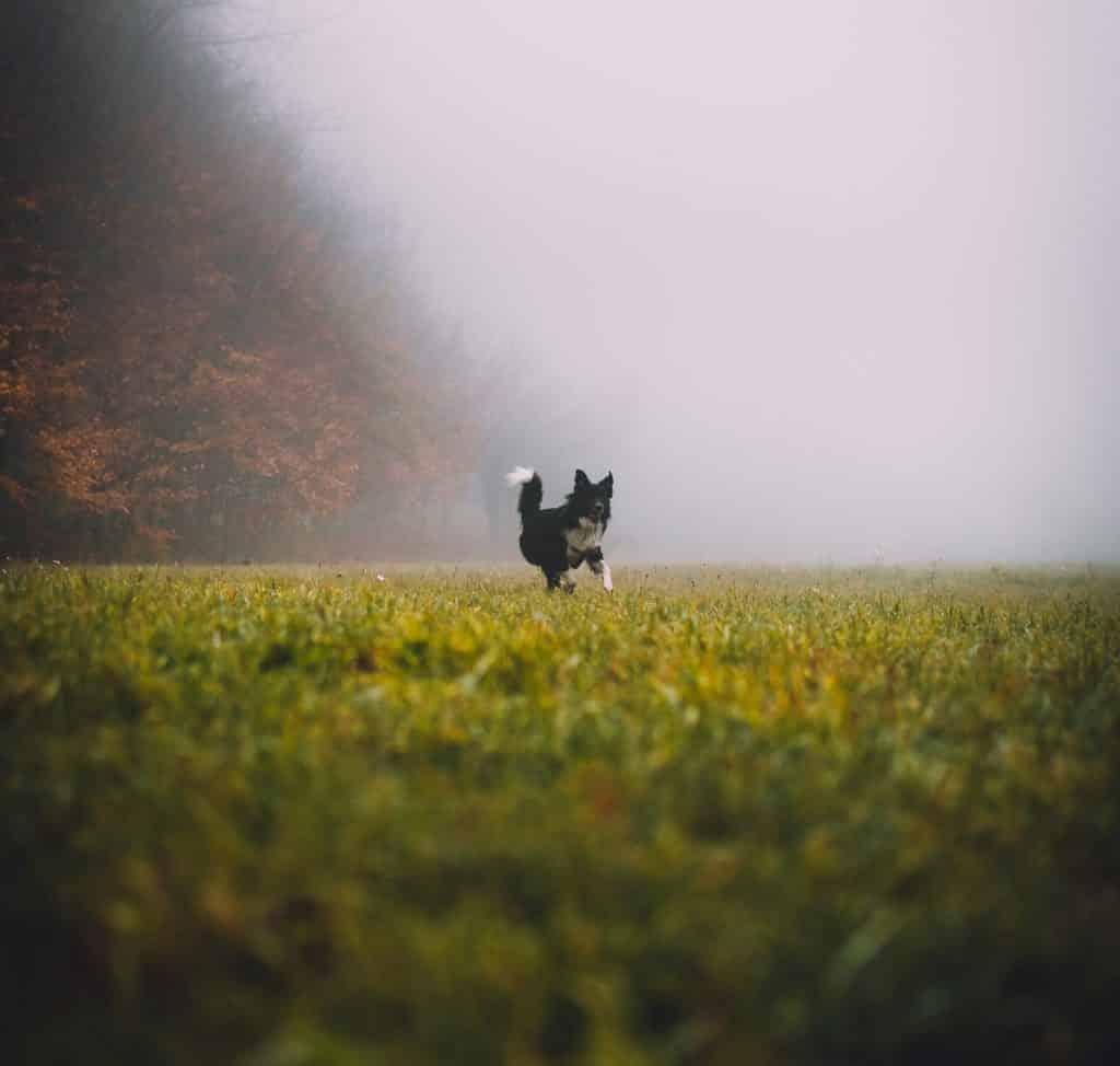 gloomy shot of a dog