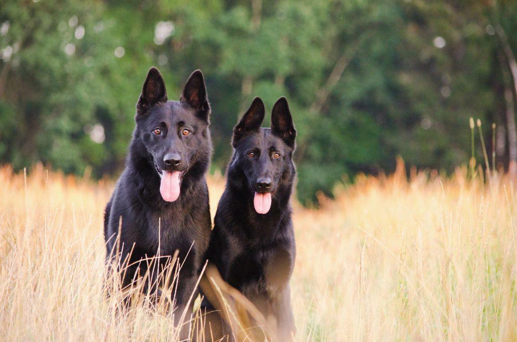 2 canine