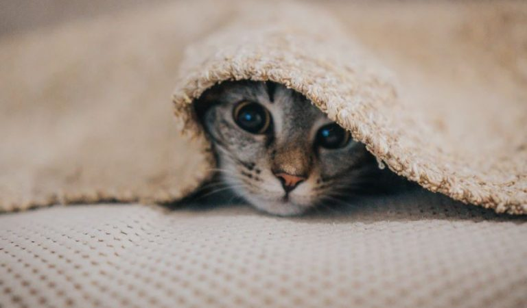 Cat meows: how many types are there and what do they mean?