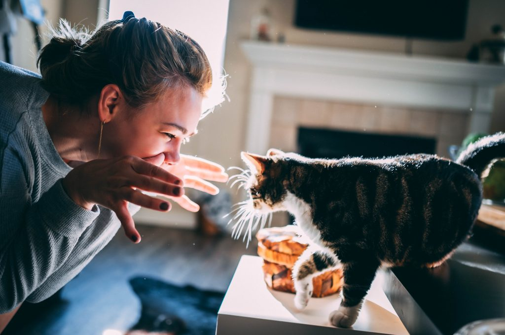 7 things you should never do with your cat
