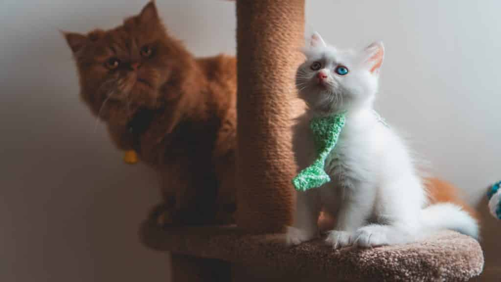 Scratching post for cats: prevent, once and for all, your cat from destroying your furniture