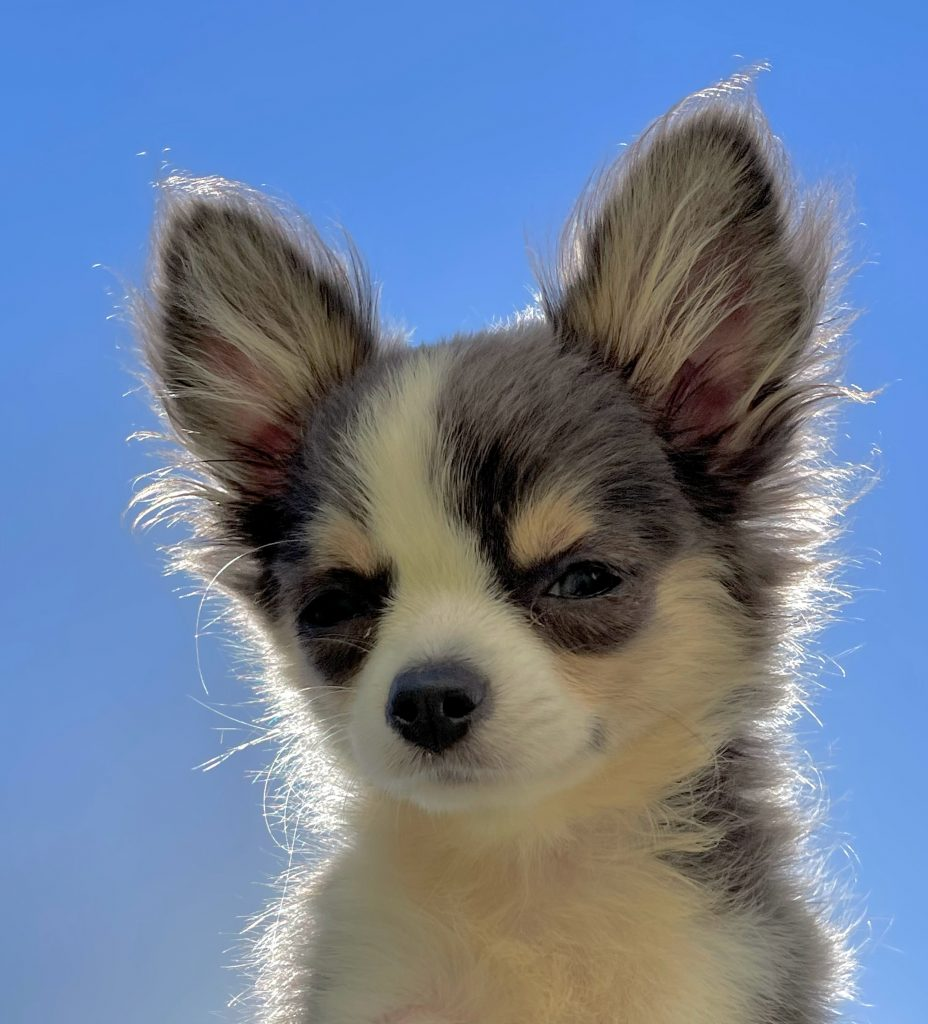 cute hairy puppy