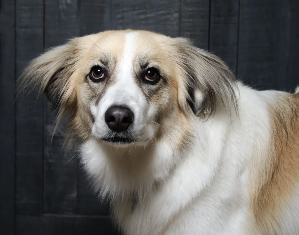 dog looking straight