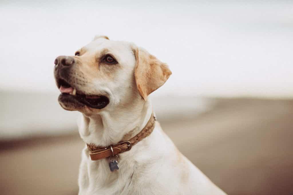 dog looking upward