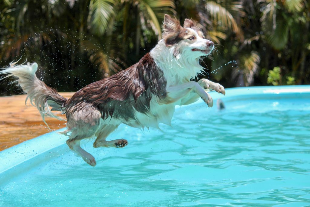 dog pool2