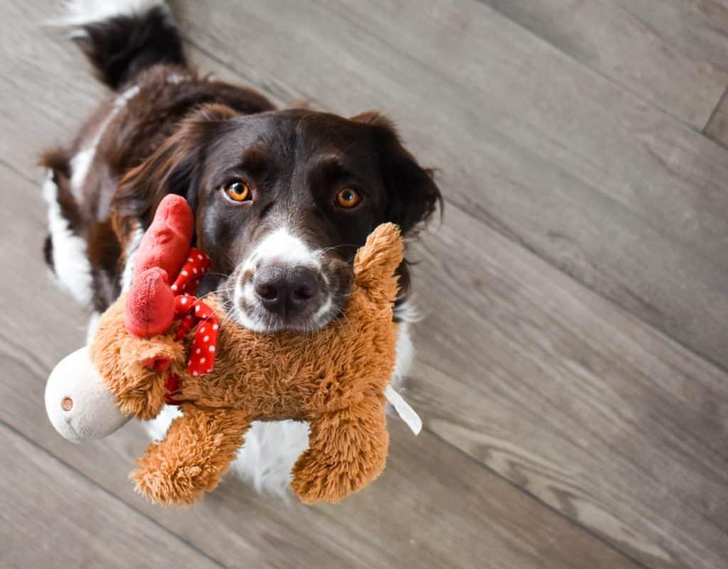 dog toys2